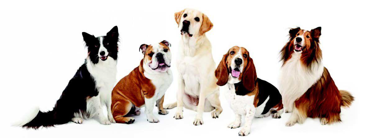 Are you looking to expand your family with a dog?