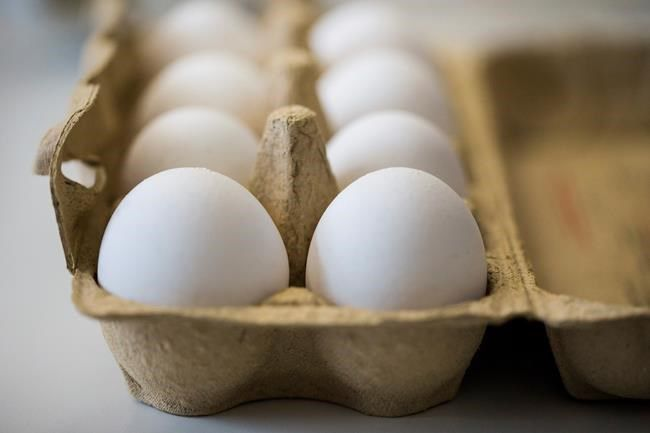 Tainted Eggs Scandal : Luxembourg hit by scare