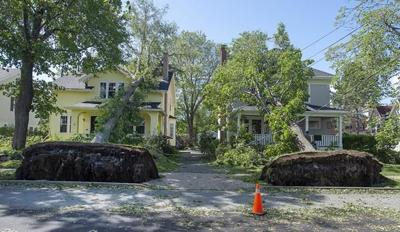 Maritime grids, forestry, coastlines need rethink in era of intense storms: experts
