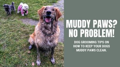 Muddy paws easy to clean