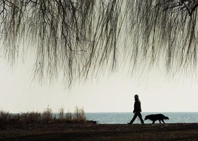Dog owners have reduced risk of dying from heart problems, says researcher