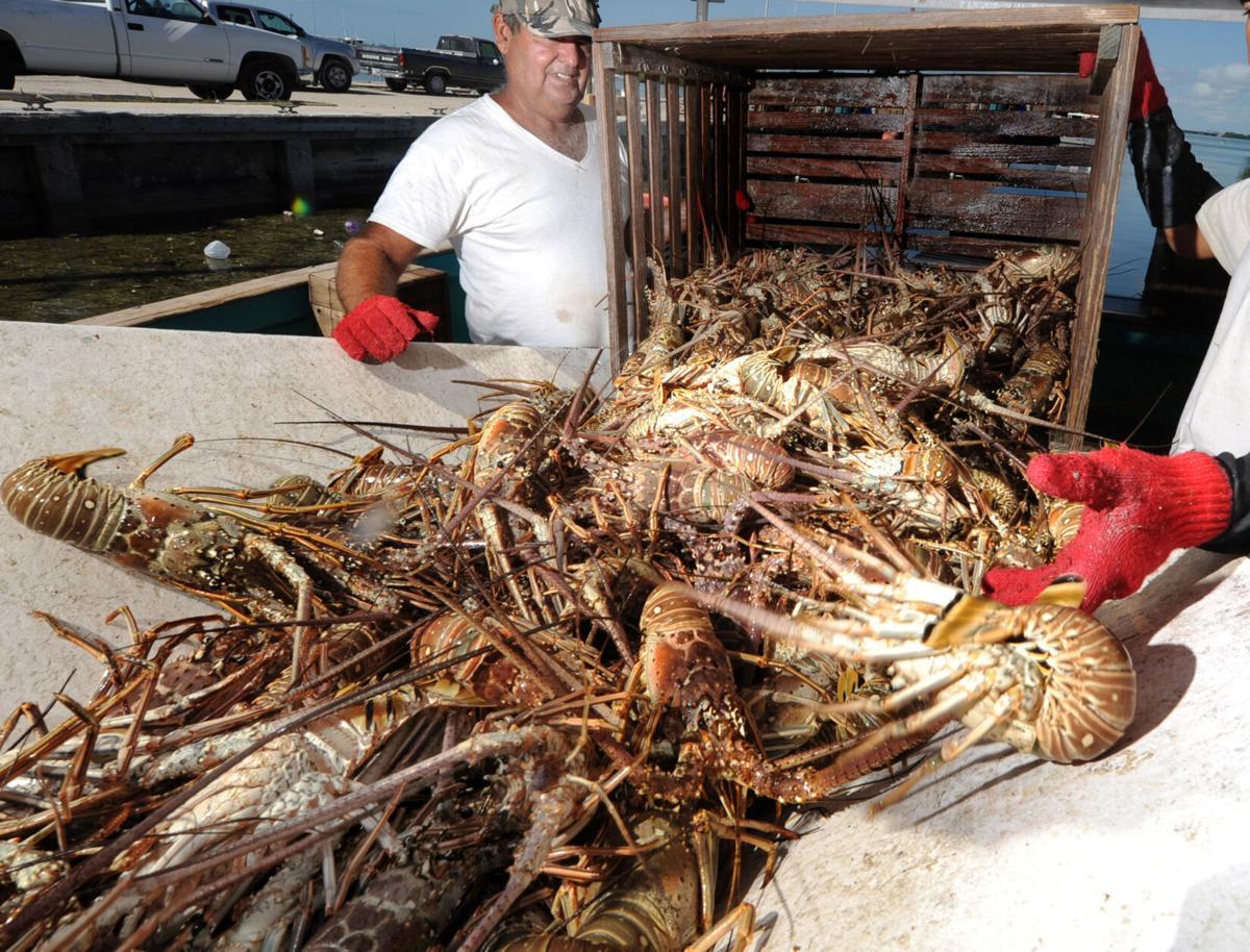 Lobster Season Ends 1
