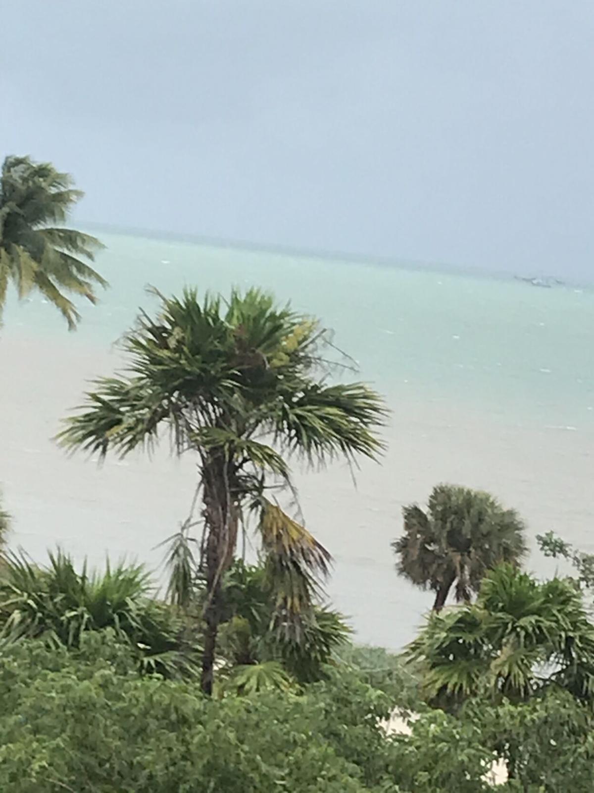 2020.10.24 kh robinson palms rustle.jpg