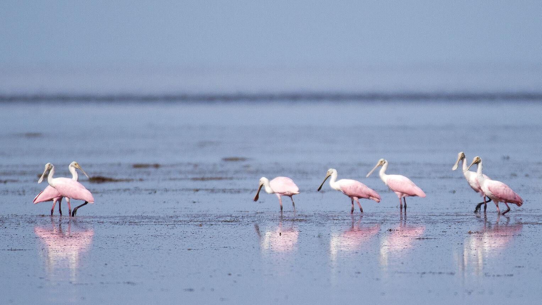 Florida Bay reaping benefits of fall rains