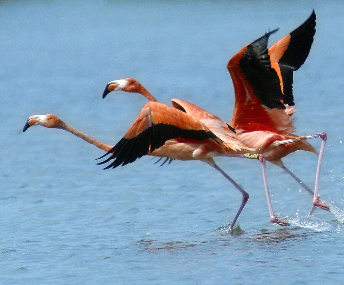 2021.06.11 flamingo status tag.jpg