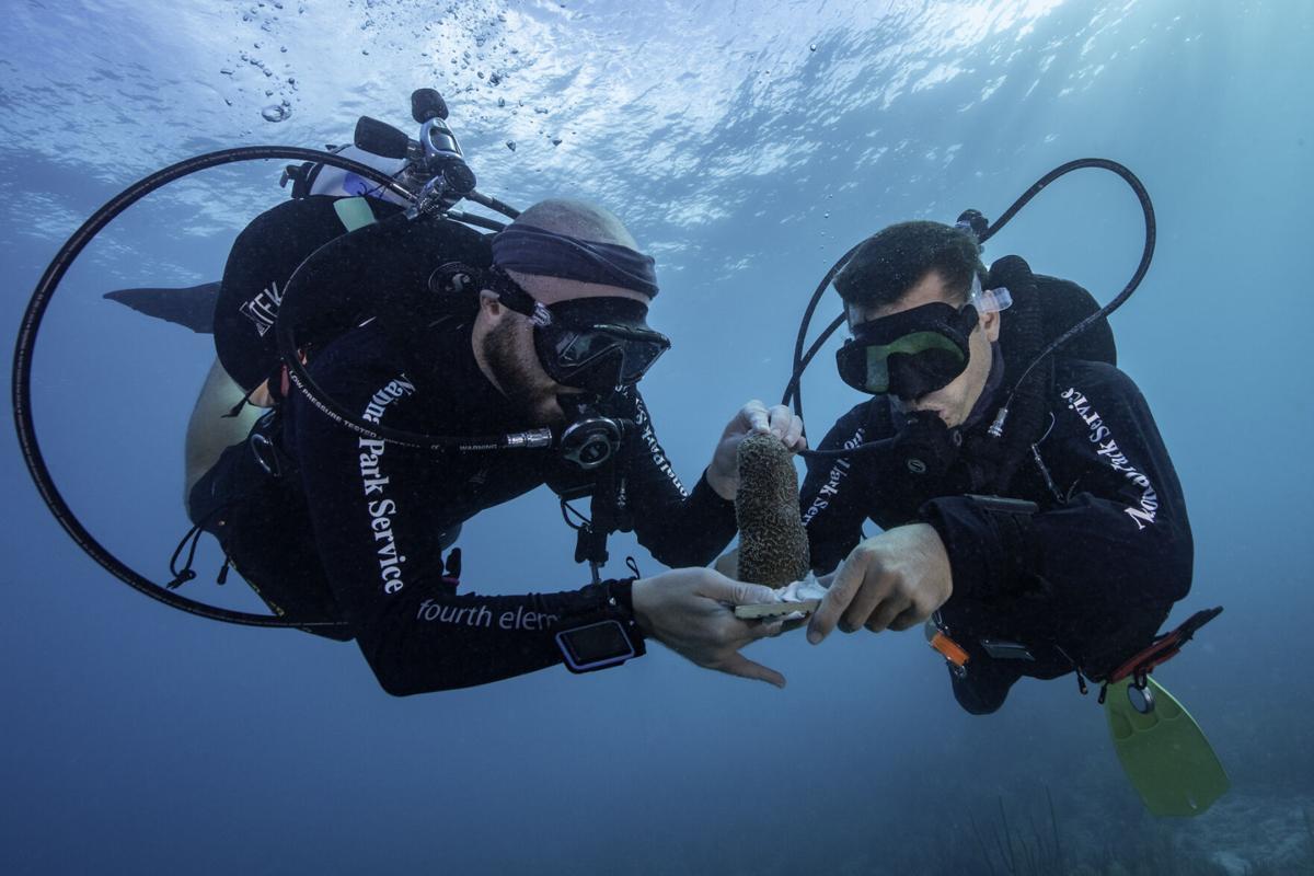 coral tortugas 4.jpg