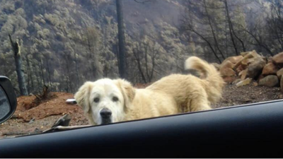 Dog found after California Camp Fire