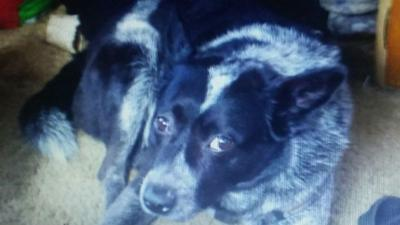 Diamond Lake family devastated after dog found shot to death