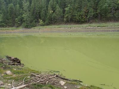 Solomon Lake algae bloom