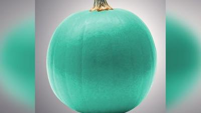 What do teal pumpkins mean on Halloween?