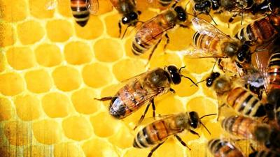 EPA approves use of pesticide that harms honey bees