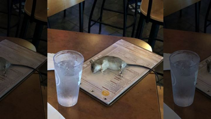 customers shocked when rat falls from ceiling at los