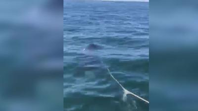 VIDEO: Alaska man says boat attacked by orca whale