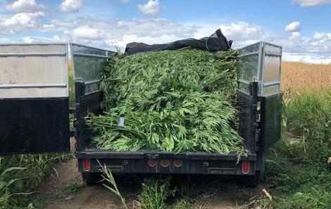 PHOTO: Franklin County Marijuana Grow Operation