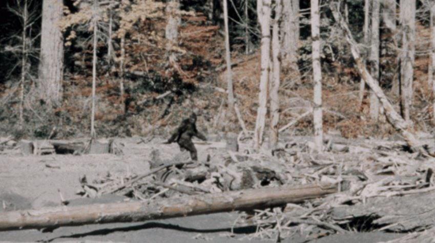 bigfoot patterson gimlin film