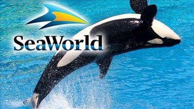 SeaWorld suing California over ban on orca breeding