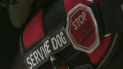 Spokane City Council aims to crack down on fake service animals