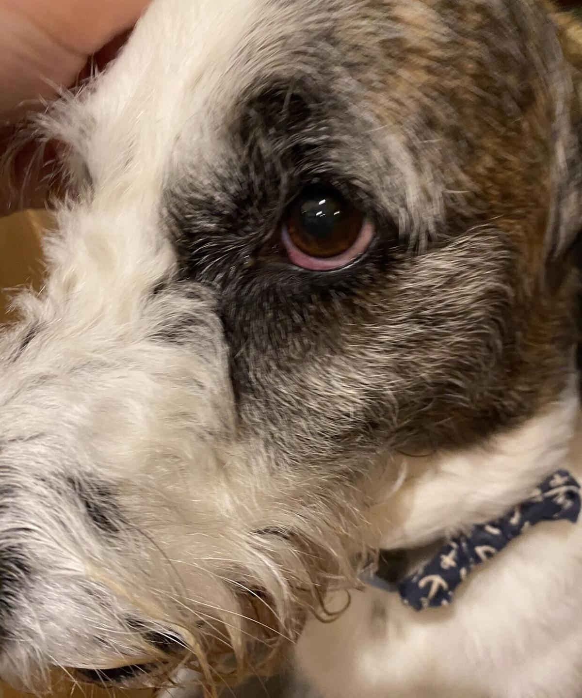 Burglar steals necklace with grandma's ashes, shaves dog's eyebrow