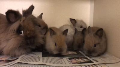 Police find nearly 300 bunnies hopping in California home