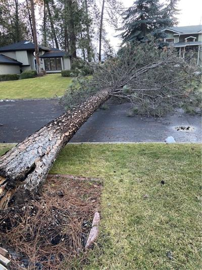 January windstorm makes way through Inland Northwest