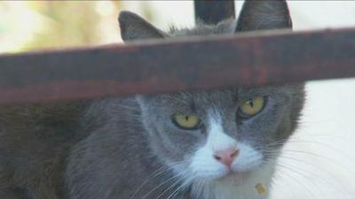 Spokane woman facing hundreds of dollars in fines for feeding stray cats