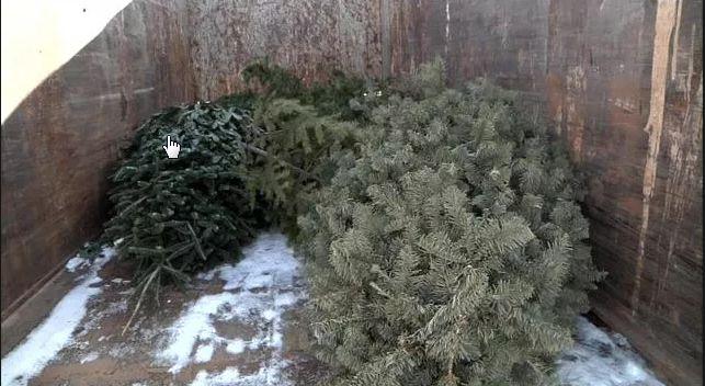 Spokane Solid Waste Christmas Trees 2020 How to get rid of your Christmas tree in Spokane area | News | khq.com