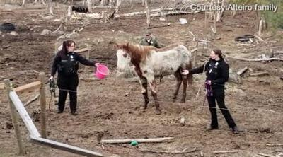 Horse seized during raid dies in SCRAPS care; animals ordered returned to family