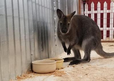 Petting Zoo CDA CLAIRE