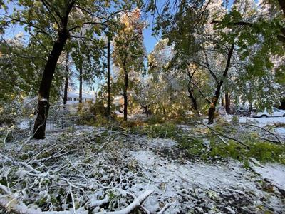 Trees down after Spokane snow 10/9/2019