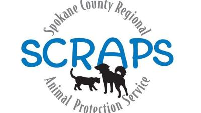 SCRAPS continues hoarding investigation, seizes 62 cats