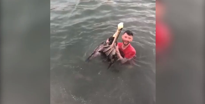 Maryland man arrested for tackling brown pelican in Florida