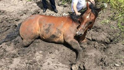 PHOTOS: Bozeman Police help save horse stuck in the mud