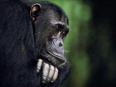 Chimp Attack Victim To Appeal To Connecticut Legislators