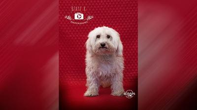 Scraps Pet Of The Week Max And Onyx Advertorial Khqcom