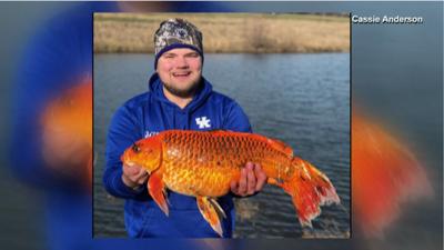Kentucky Man reels in 20 pound Goldfish