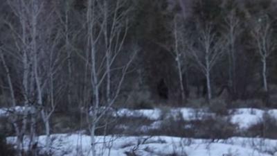 You decide: Did this hiker spot Bigfoot in Utah?
