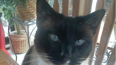 Fifth cat found mutilated in North Spokane