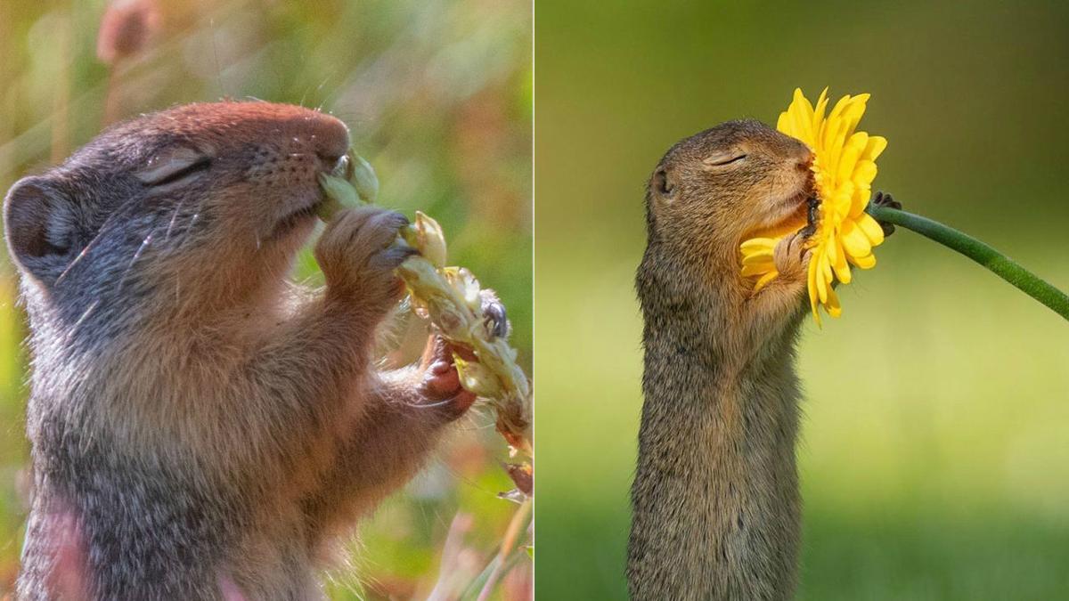 Flower-Smelling Squirrels