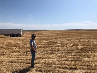 Community Comes Together To Help Harvest Ritzville Farmer's Wheat While He Battles Cancer