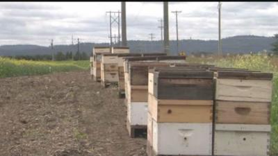 Bee boxes causing concern for neighbors in Kootenai County