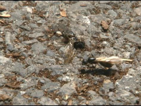 Where Did All Of These Flying Ants Come From News Khq Com