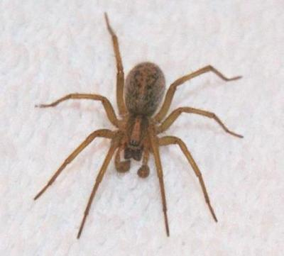 PHOTOS: Hobo Spider season has arrived