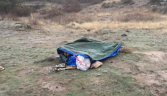 PHOTO: Whitman County Dead Deer