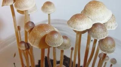 Court Docs: Cheney man on 'magic mushrooms' tells cops he's 'freaking out'
