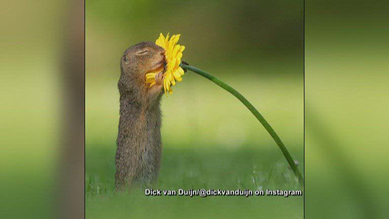 Austria flower-smelling squirrel