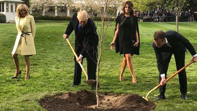 White House mystery: Where is Macron's gifted oak tree?