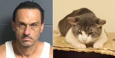 New Mexico man accused of animal abuse; vet says cat on meth
