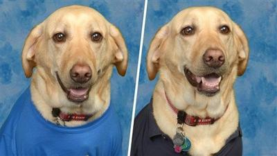 Beloved service dog gets picture in Florida elementary school yearbook