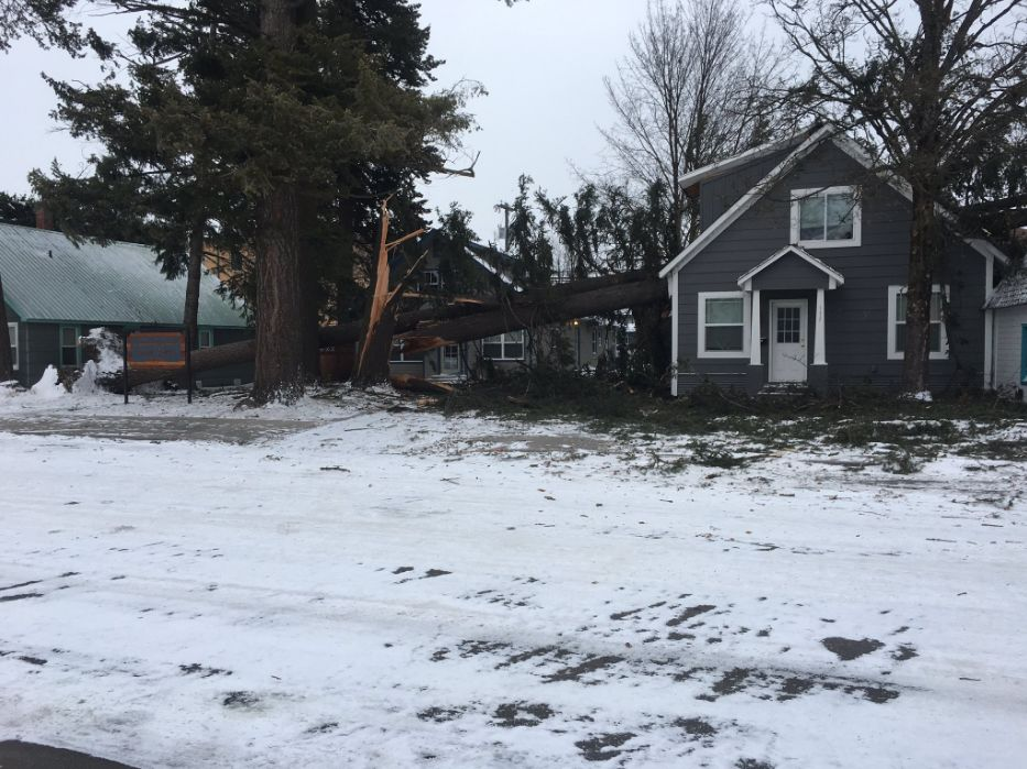 Two falling trees land on home, businesses in Sandpoint