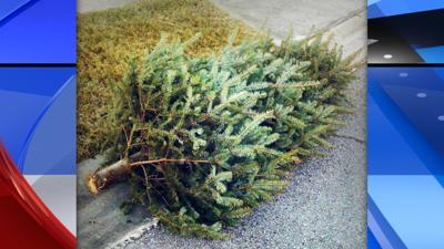 Spokane Solid Waste Christmas Trees 2020 City of Spokane offers free curbside pickup of Christmas trees Dec